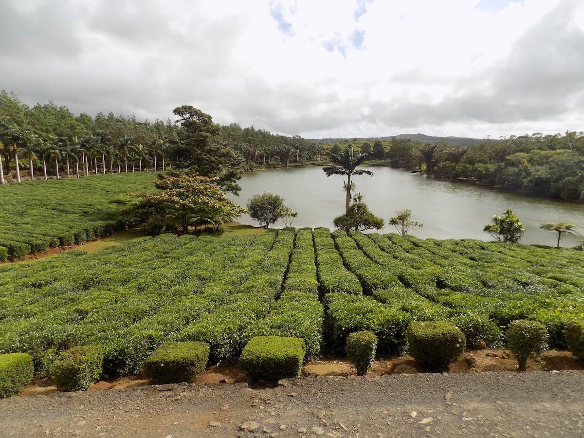 Quelles sont les plantations faites à Maurice ?