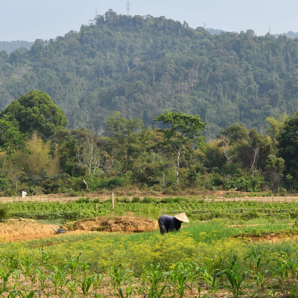 Le Laos, pays vert